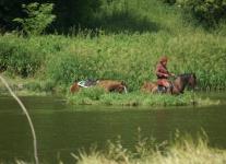 Plavení koní Zbořeňák